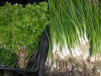วิธีการเก็บรักษาต้นหอมผักชี